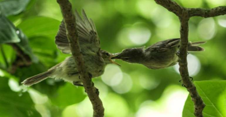 A conservation group bought the tiny Seychelles isle of Cousin Island in 1968 to save a songbird, the Seychelles Warbler, from extinction.  By Yasuyoshi CHIBA (AFP)
