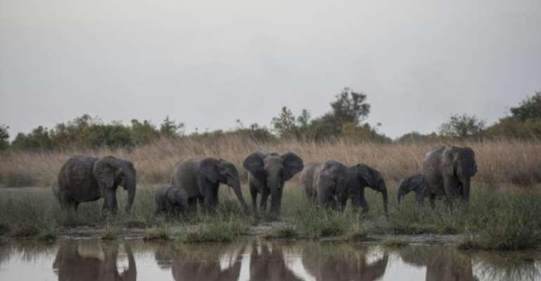A herd of elephants feed around the waterhole in late afternoon at Pendjari National Park in Benin January 10, 2018.  By STEFAN HEUNIS (AFP)