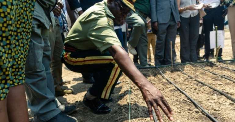 A senior army representative sowing some of the first industrial hemp crop in Zimbabwe at the Harare Central Prison in the capital, on October 11, 2019.The Zimbabwe Industrial Hemp Trust (ZIHT) is the first organization to be issued with a cannabis license in the southern African country..  By Jekesai NJIKIZANA (AFP)