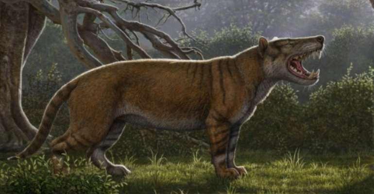A Simbakubwa kutokaafrika, a gigantic mammalian carnivore that lived 22 million years ago in Africa and was larger than a polar bear.  By Mauricio ANTON, Mauricio ANTON (Ohio University/AFP)