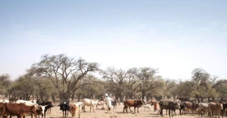 A stock-breeder with cattle on a trail in Chad's Ouaddai region, where changing conditions contribute to clashes between nomads and settled farmers.  By Amaury HAUCHARD (AFP/File)