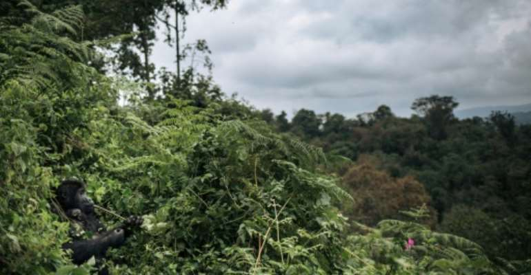 A third of tropical flora in Africa is threatened, including in southern Democratic Republic of Congo.  By ALEXIS HUGUET (AFP/File)