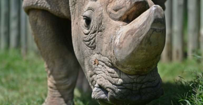 An initial enquiry said the rhinos may have become dehydrated and died after drinking saline water in their new habitat.  By Tony KARUMBA (AFP/File)