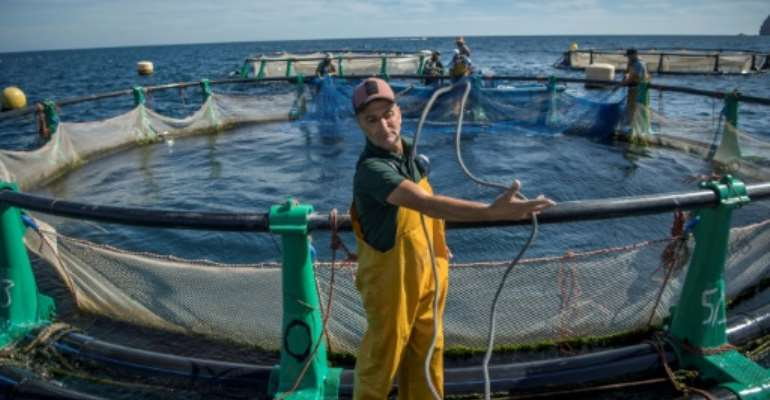Aquaculture offers hope to struggling fishermen in the Moroccan city of M'diq.  By FADEL SENNA (AFP)