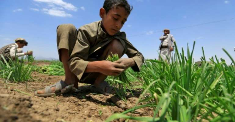 Around two-thirds of those facing severe food shortageslive in war-torn countries like Yemen.  By Mohammed HUWAIS (AFP)
