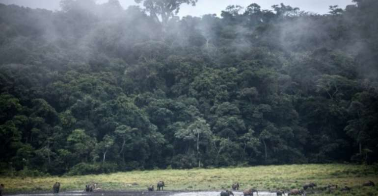 At the end of June, Gabon became the first country on the continent to receive international funds to continue its efforts against deforestation.  By Amaury HAUCHARD (AFP/File)