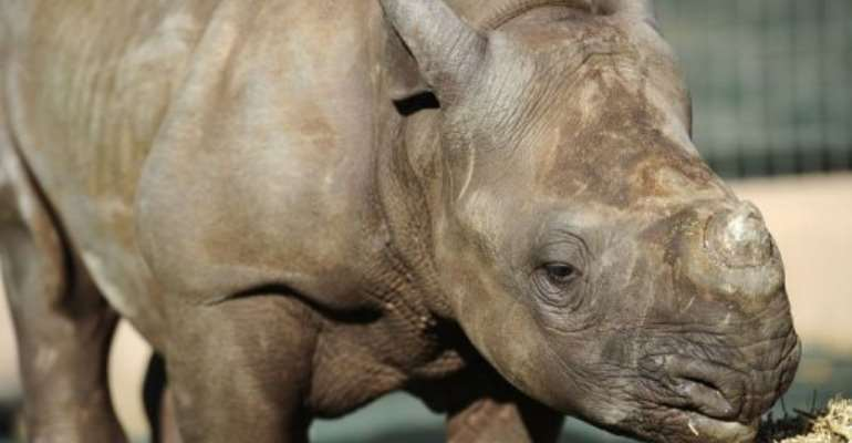 Entabeni is one of the world's only dedicated orphanages for rhino calves.  By Stephane de Sakutin (AFP)