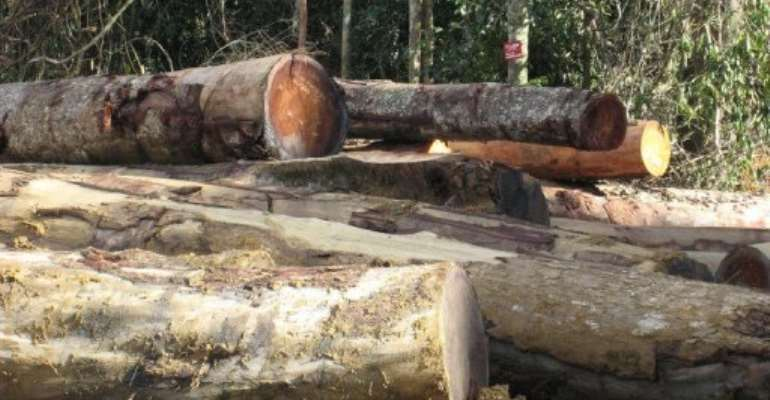 Gabon is densely forested with prized woods.  By Delphine Ramond (AFP/File)