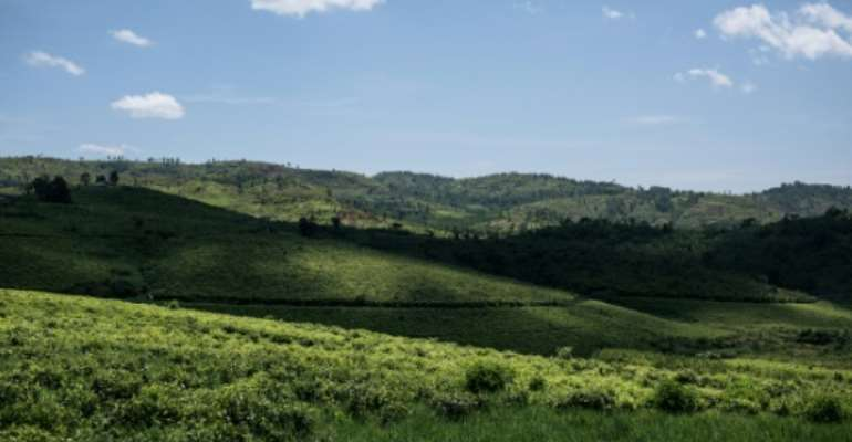 Beautiful but dangerous: A view across the JTN tea plantation in a region of eastern DR Congo known as 'the Switzerland of Africa.' The verdant region is also riddled with brutal militias, who often clash over land.  By ALEXIS HUGUET (AFP)