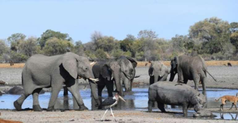Botswana is home to some 130,000 elephants.  By MONIRUL BHUIYAN (AFP/File)