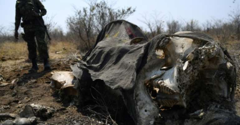 Botswanan authorities showed journalists the carcasses of dead elephants in the Chobe National Park but denied an alleged rise in poaching.  By MONIRUL BHUIYAN (AFP)