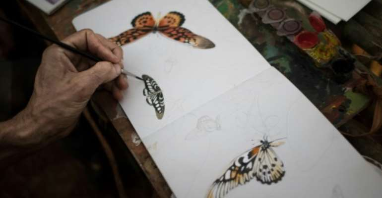 Brush strokes: The expedition's draftsman draws an African giant swallowtail and other species.  By FLORENT VERGNES (AFP)