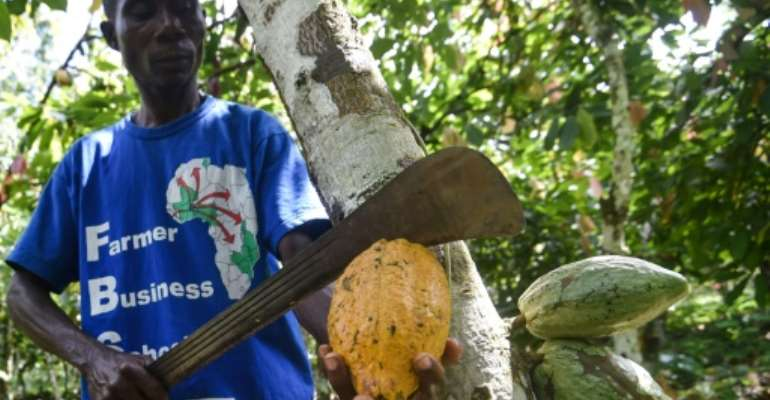 Cacao is still the mainstay of the Ivorian economy, despite impressive growth in services.  By SIA KAMBOU (AFP)