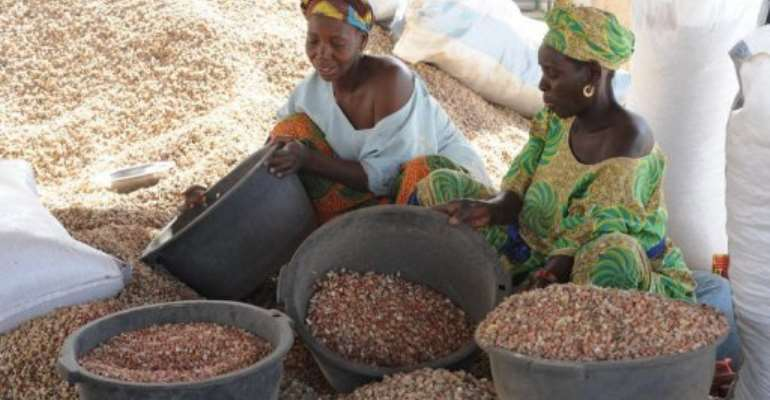Women sort peanuts on February 23, 2013 in the central Senegalese village of Dinguiraye.  By Seyllou (AFP/File)