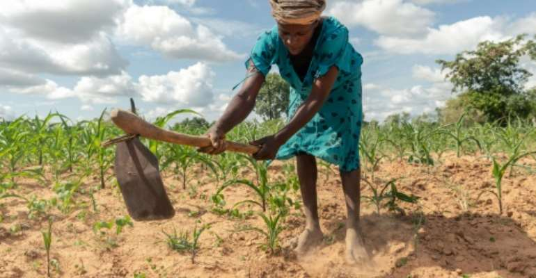 Climate extremes: A year ago, Josephine Ganye was hit by a devastating cyclone -- now she is struggling with a crippling drought.  By Jekesai NJIKIZANA (AFP)