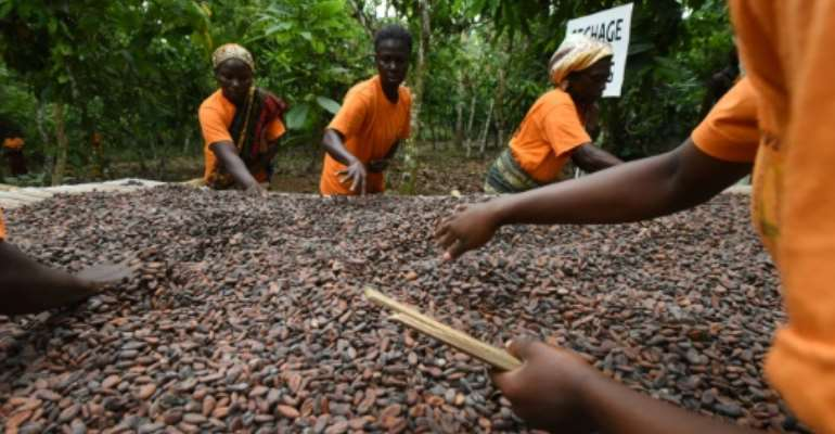 Cocoa accounts for 40 percent of the Ivory Coast's exports but the country only earns about eight percent of total profits in the cocoa-chocolate sector.  By ISSOUF SANOGO (AFP/File)