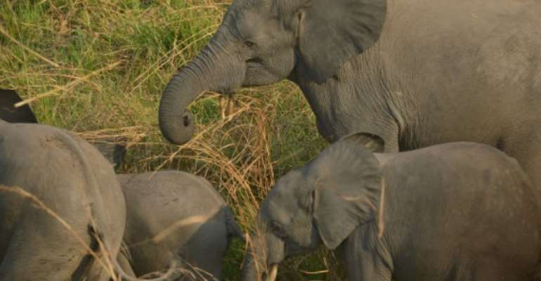 Congo had only recently been praised by UNESCO for elephant conservation efforts.  By TONY KARUMBA (AFP/File)