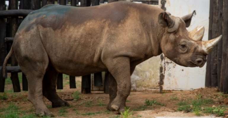 Conservation efforts have brought the black rhino population back up to around 5,000.  By STRINGER (AFP/File)