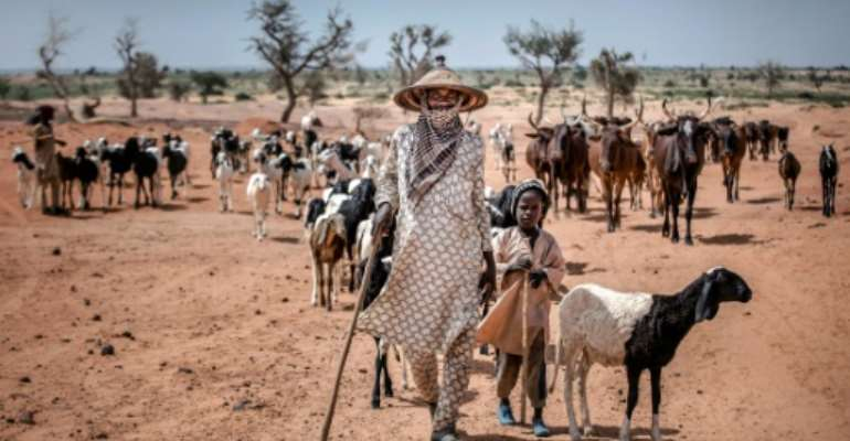 Dairy farmers in arid portions of West Africa are nomadic, making developing business to fully meet demand difficult.  By Luis TATO (FAO/AFP/File)