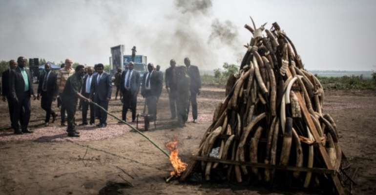 Democratic Republic of Congo President Joseph Kabila on Sunday set light to an ivory stockpile to highlight the problem of poaching in the  African country.  By John WESSELS (AFP)