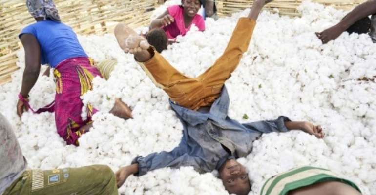 Dyed in the wool: Cotton supports a quarter of the population of Mali, which has retaken the title of Africa's cotton champion.  By MICHELE CATTANI (AFP/File)