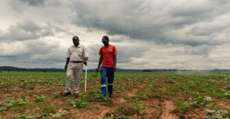 For Zimbabwean farmers like Benard Chinyemba (L), 60, a qualified mechanical engineer who was offered a farm during Zimbabwe's land reform, the programme is a success.  By Jekesai NJIKIZANA (AFP)