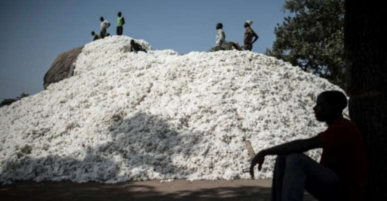 Harvest time: Togo and Benin are looking to cotton to create jobs in their agriculture-dependent economies.  By Stefan HEUNIS (AFP)