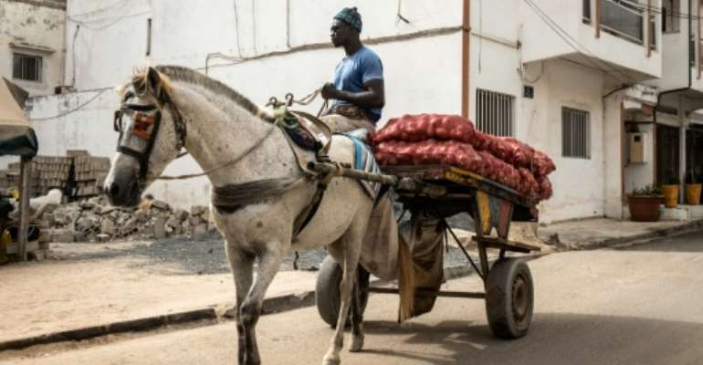 Horses are ubiquitous in Dakar, where carts weave through traffic-clogged streets and squeeze down narrow sandy alleyways.  By JOHN WESSELS (AFP)