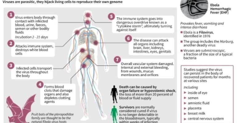 How the Ebola virus attacks the body.  By John Saeki/Adrian Leung (AFP)