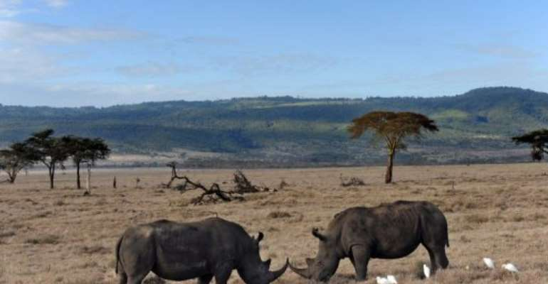 Kenya has the world's third largest rhino population.  By Roberto Schmidt (AFP/File)