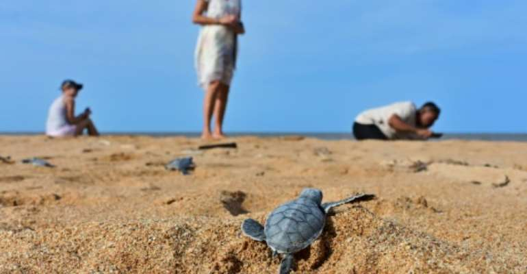 Locals fear a planned coal-fired plant threatens the pristine beauty of Kenya's Lamu archipelago, home to five species of threatened turtles.  By TONY KARUMBA (AFP)