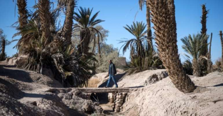 Long a buffer against desertification, Morocco's oases have gone through cycles of drought in recent decades and according to Greenpeace are now threated with extinction.  By FADEL SENNA (AFP)