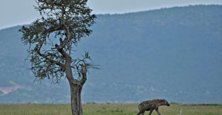 Maasai Mara's entire reserve model is under threat.  By Tony Karumba (AFP)