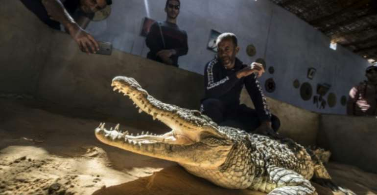 Mamdouh Hassan (R) shows a crocodile to visitors at his crocodile terrarium in the Nubian village of Gharb Soheil, on the west bank of the Nile river in southern Egypt.  By Khaled DESOUKI (AFP)