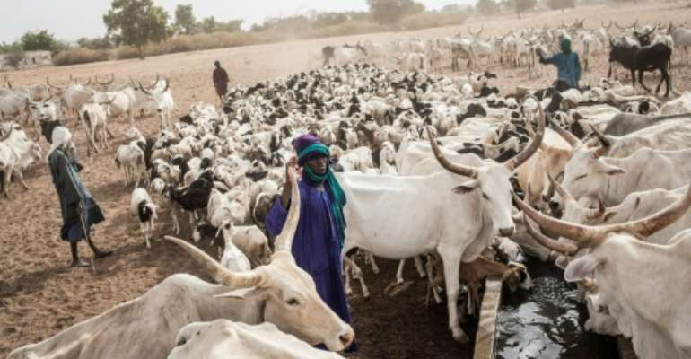 Many Fulani in Louga have turned to the so-called