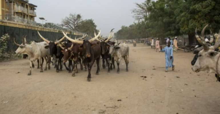 Most of Cameroon's cattle is raised in the heavily populated Far North region.  By patrick meinhardt (AFP/File)