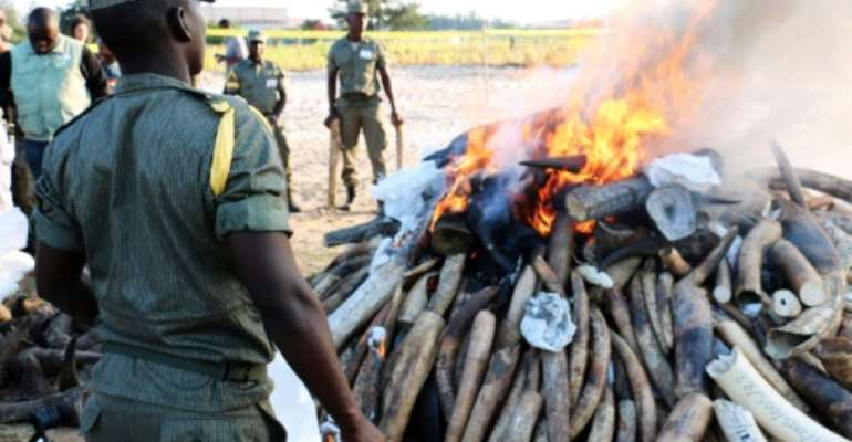 Mozambican authorities stand near a burning pile of ivory and rhino horns in Maputo on July 6, 2015.  By Adrien Barbier (AFP)