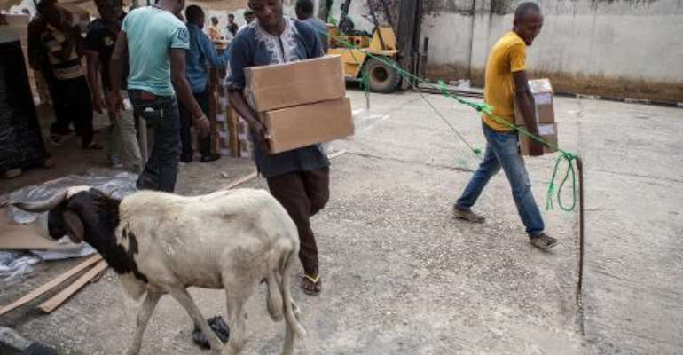 A goat walks past as officials prepare voting materials at the Independent National Electoral Commission offices in Port Harcourt on March 26, 2015, ahead of March 28 presidential elections.  By Florian Plaucheur (AFP)