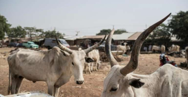 Nigeria's Katsina state has been targeted by kidnappers and cattle thieves in recent months.  By STEFAN HEUNIS (AFP/File)