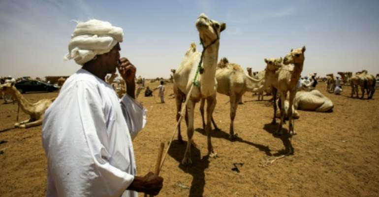 Not far from Sudan's capital Khartoum, dozens of camel traders are oblivious to the country's biggest political upheaval in decades.  By ASHRAF SHAZLY (AFP)