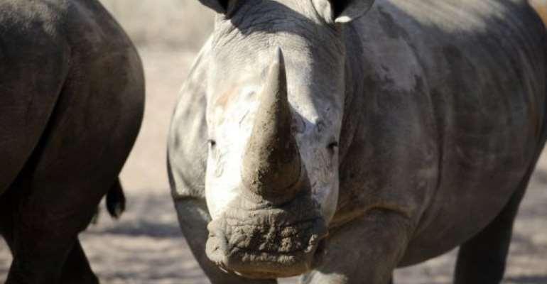 Radioactive rhino horns may deter poachers in S.Africa