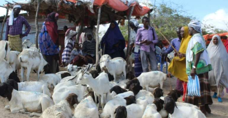 People buy sacrificial sheep and goats for the Muslim festival Eid.  By STR (AFP)