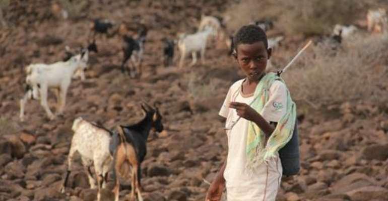 A Djiboutian boy grazing goats in Garabtisan on August 17, 2011.  By Abdourazak Ali (AFP/File)