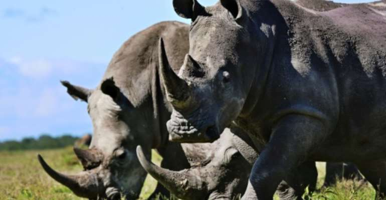 Rhinos, like those seen here in Kenya, are increasingly at risk in Botswana because of poaching.  By TONY KARUMBA (AFP)
