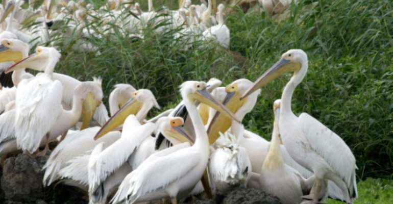 Senegal's Djoudj Bird Sanctuary is home to millions of birds from almost 400 different species.  By SEYLLOU DIALLO (AFP/File)