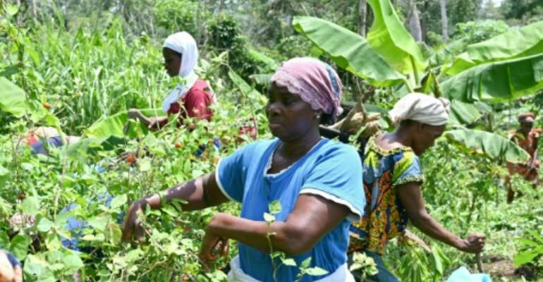 Some 2,000 women have joined forces through the Walo organic farming collective.  By Issouf SANOGO (AFP)