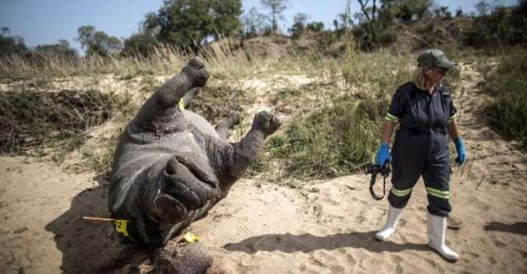 The carcass of a poached and mutilated white rhino lies on the banks of a river as a South African Police Services forensic investigator works on the crime scene on September 12, 2014 at Kruger National Park.  By Marco Longari (AFP/File)