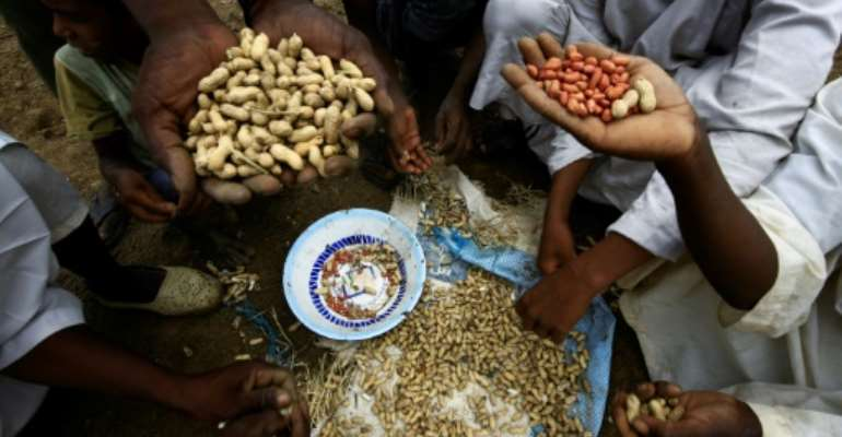 Sudanese farmers display their harvest of peanuts, a key crop hit by a government export ban.  By ASHRAF SHAZLY (AFP)