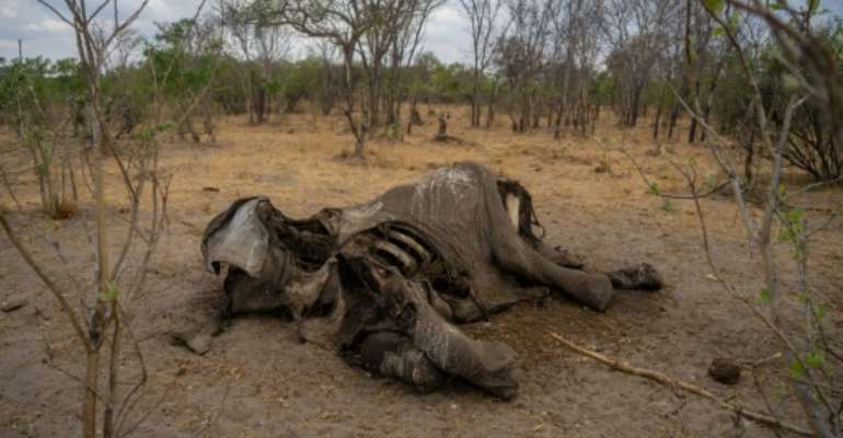 Taken on November 12, 2019 it shows the carcass of an elephant that succumbed to drought in the Hwange National Park, in Zimbabwe..  By ZINYANGE AUNTONY (AFP/File)