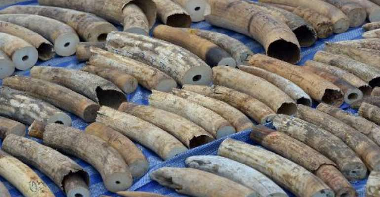 The 739 pieces of tusk were found stashed in a container which arrived at the port on April 18 after being shipped from the Democratic Republic of Congo destined for Laos, according to a statement by Thai customs.  By Pornchai Kittiwongsakul (AFP)